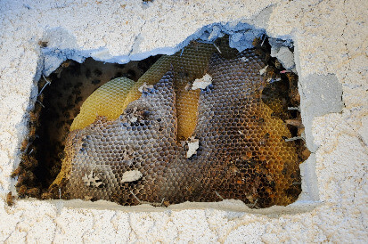 SoCal Bee Removal Repair Services